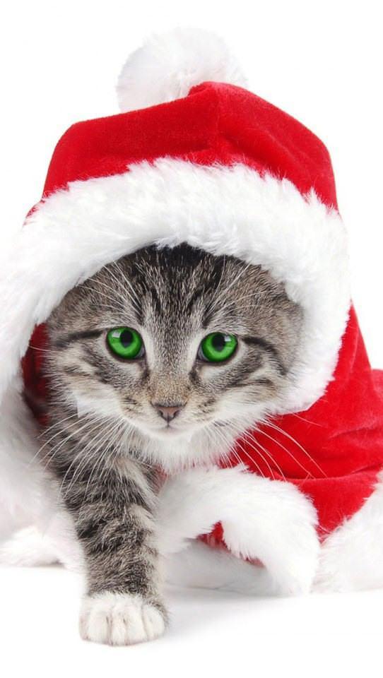 猫 ねこ画像 2197