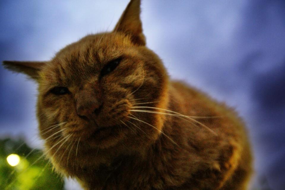猫 ねこ画像 2203
