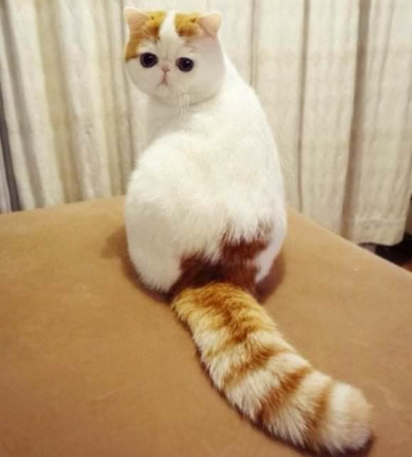 猫 ねこ画像 2204