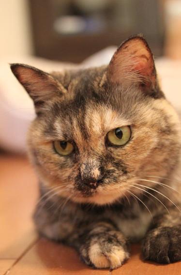 猫 ねこ画像 2207