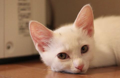 猫 ねこ画像 2212