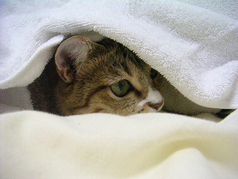 猫 ねこ画像 2216