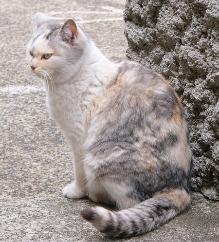 猫 ねこ画像 2218