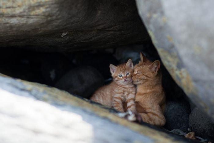 猫 ねこ画像 2236