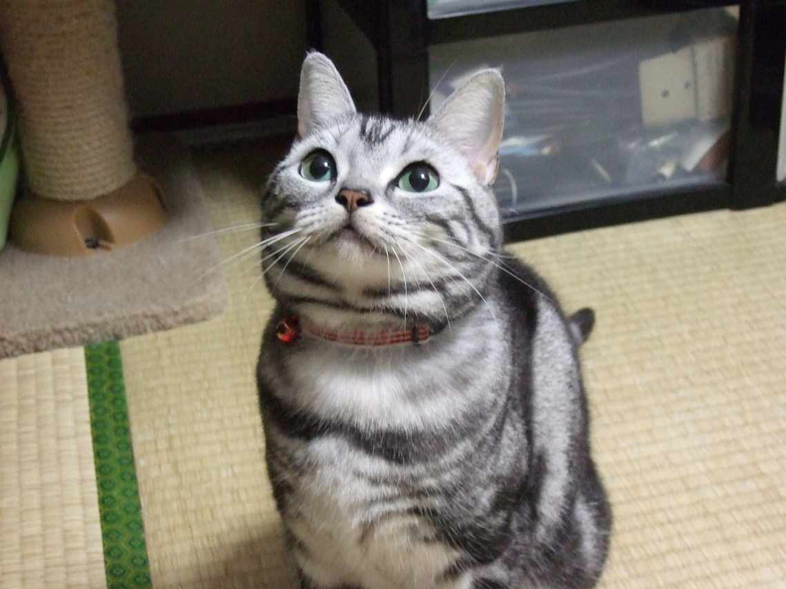 猫 ねこ画像 2239