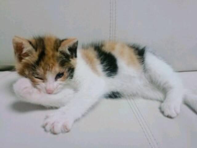 猫 ねこ画像 2243