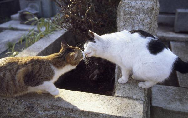 猫 ねこ画像 2244
