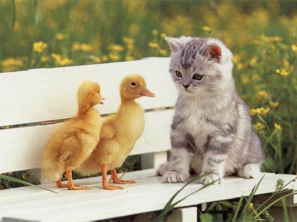 猫 ねこ画像 2245