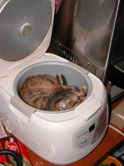 猫 ねこ画像 2247